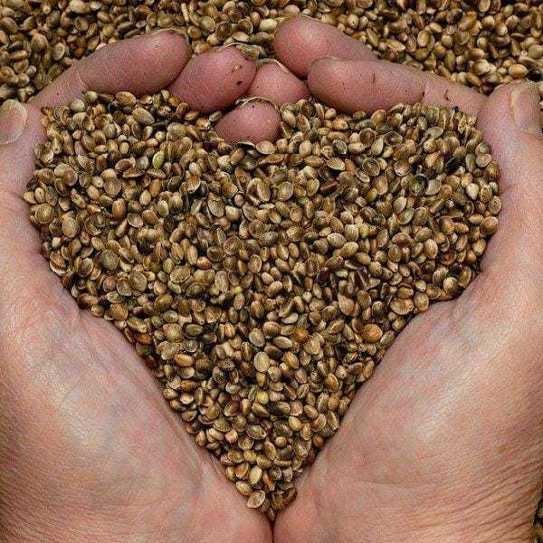 Todos contra la esclavización de las semillas 16