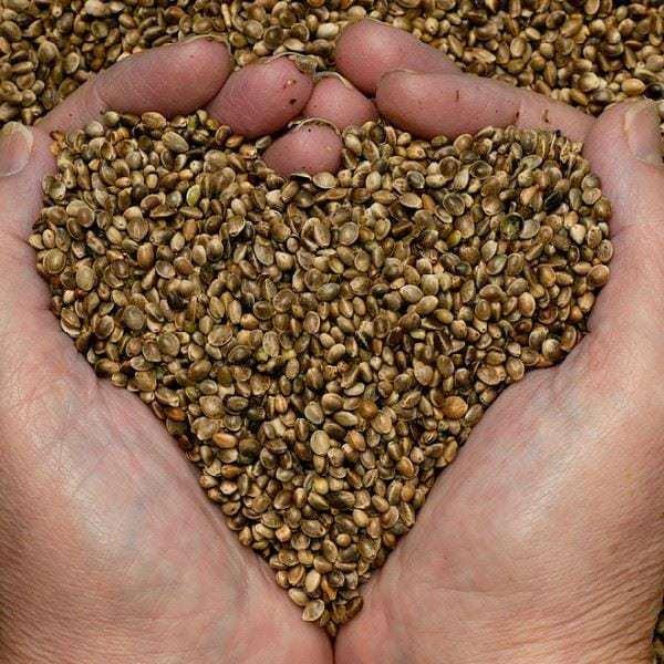 propiedades-de-las-semillas-de-canamo0