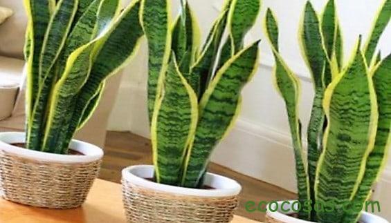 Las 5 mejores plantas para filtrar las toxinas del baño 1