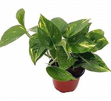 Las 5 mejores plantas para filtrar las toxinas del baño 4