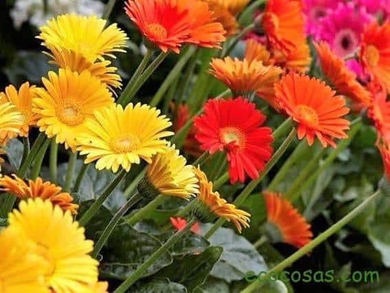 Las 5 mejores plantas para filtrar las toxinas del baño 5
