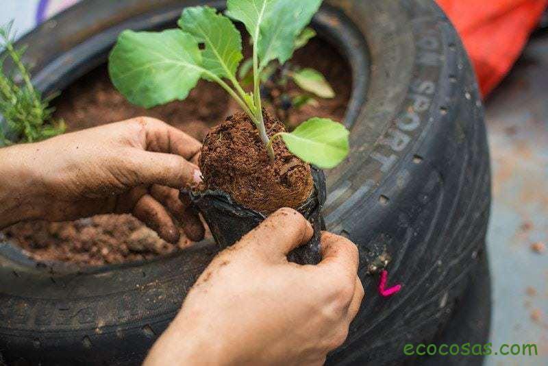 plantas que crecen rapido