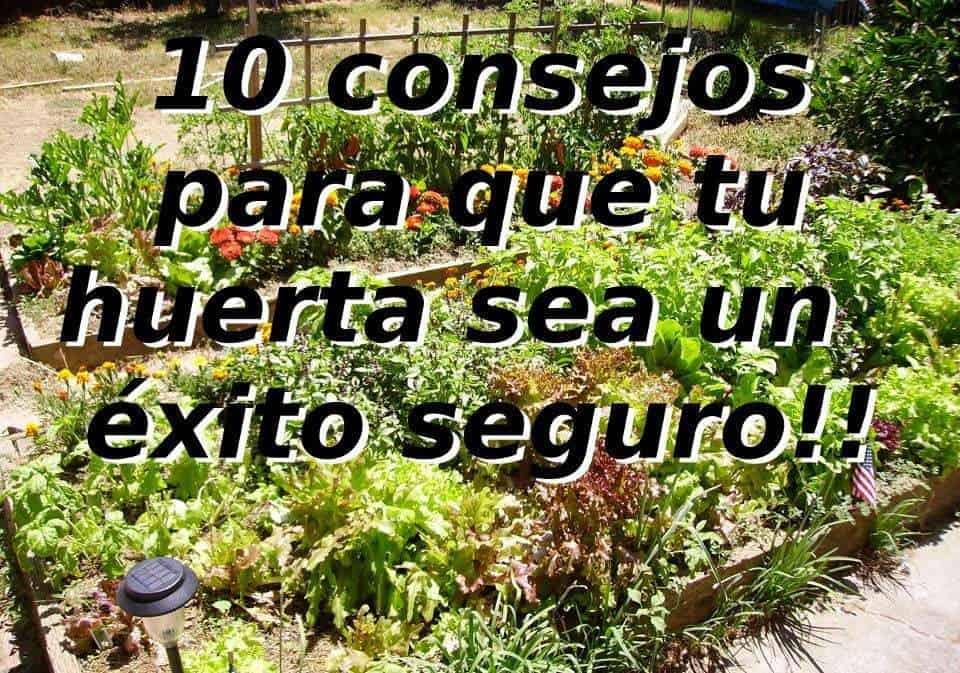 10 consejos para que tu huerta sea un éxito seguro!!
