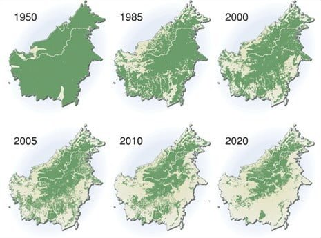 desforestacion Borneo