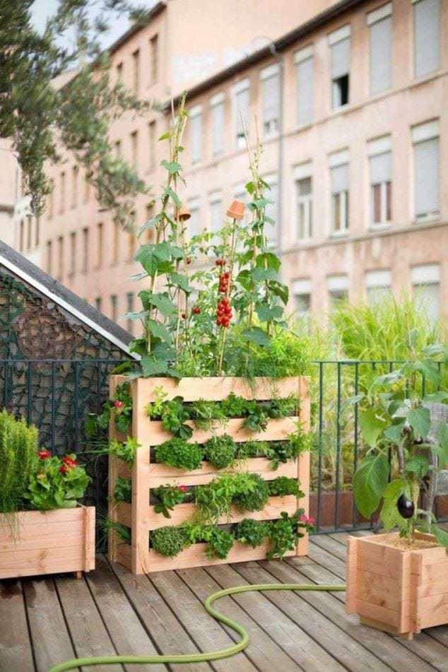Quintais imortais 2016 01 10 for Hacer un huerto en el jardin