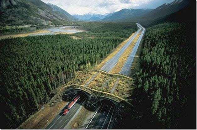 ponte-verde2