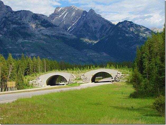 ponte-verde3