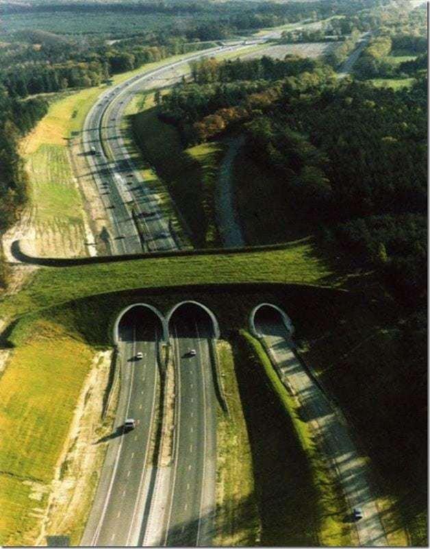 ponte-verde4