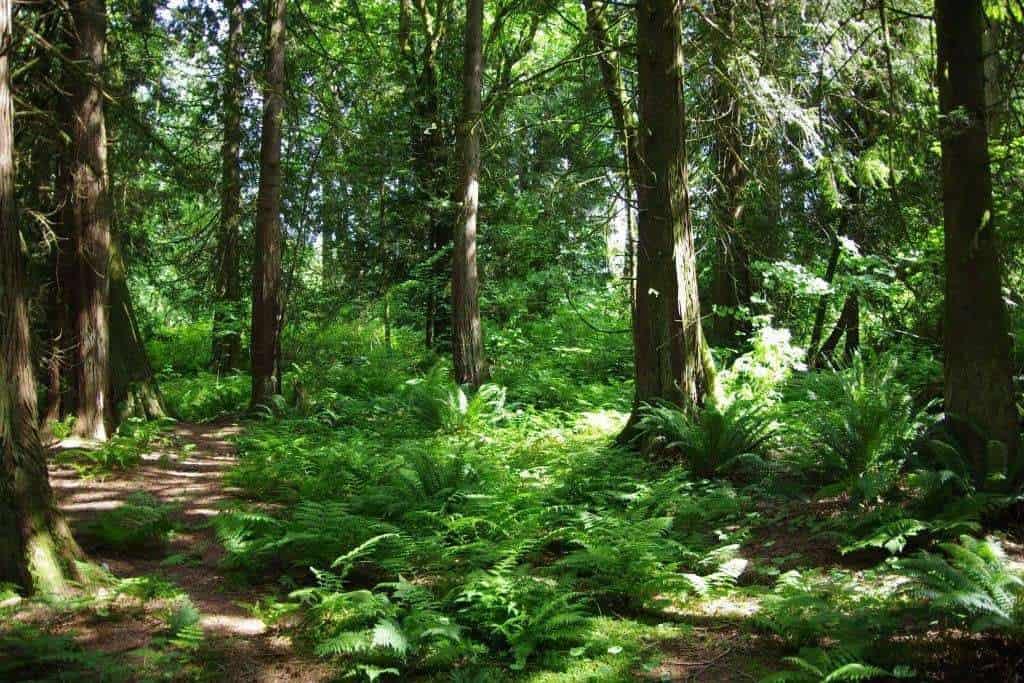 Investigadora Canadiense prueba que los árboles se comunican entre ellos