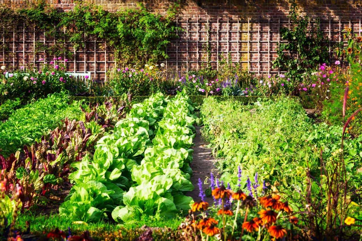 3 consejos para cuidar nuestro huerto ecol gico en