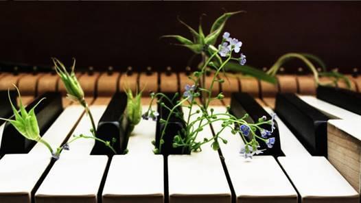 La música y las plantas