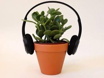 efectos-de-la-musica-sobre-el-crecimiento-de-las-plantas