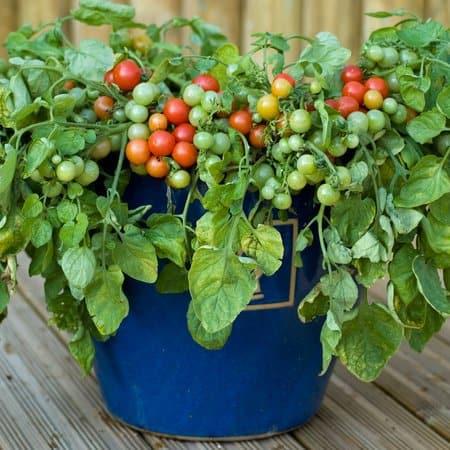 14 plantas ideales para el macetohuerto!! 8