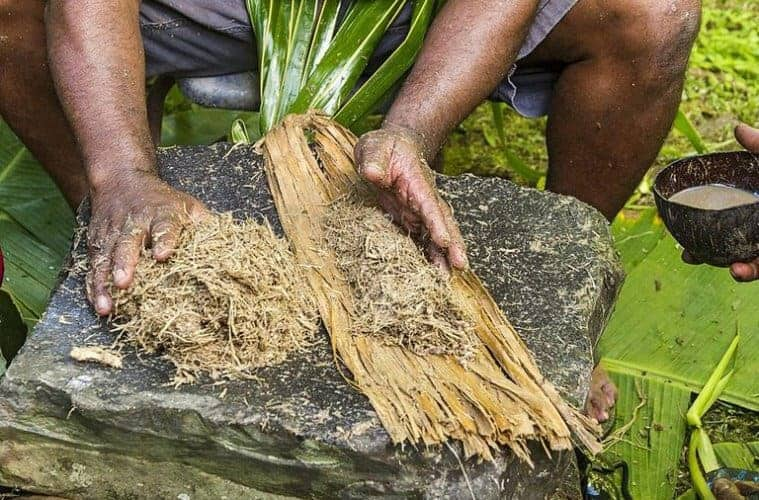 ¿Qué es Kava? Ventajas, uso seguro, y cómo hacer el té de la kava 1