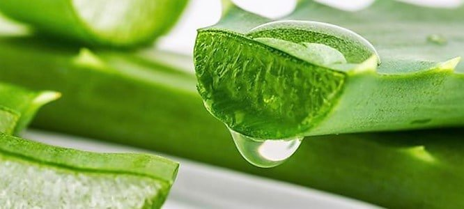 Sábila o Aloe Vera propiedades, formas de uso y contraindicaciones 1