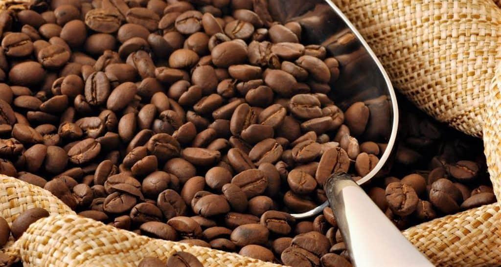 60% de las especies de Café en riesgo de extinción 1