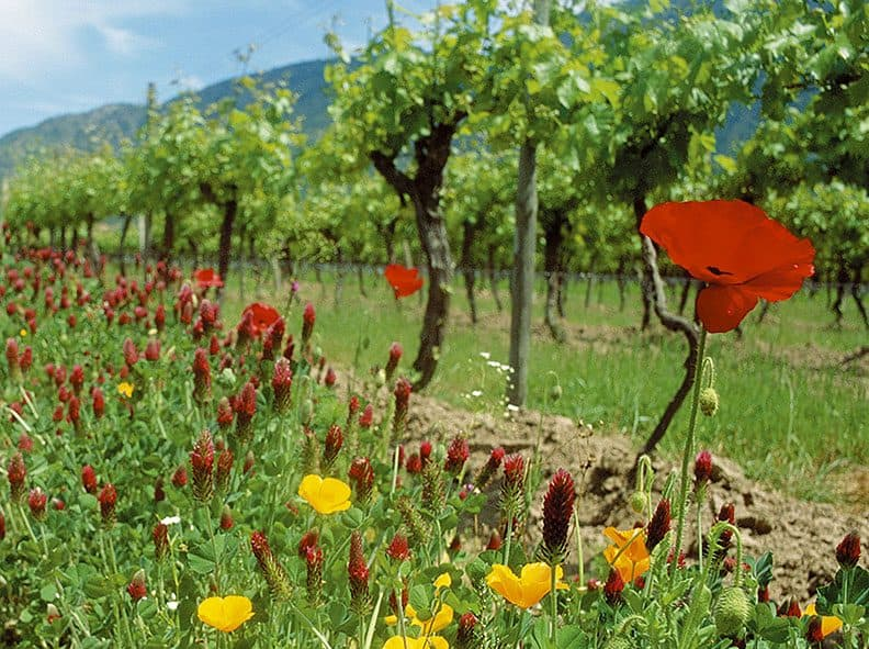 Plantan flores para disminuir el uso de pesticidas 1