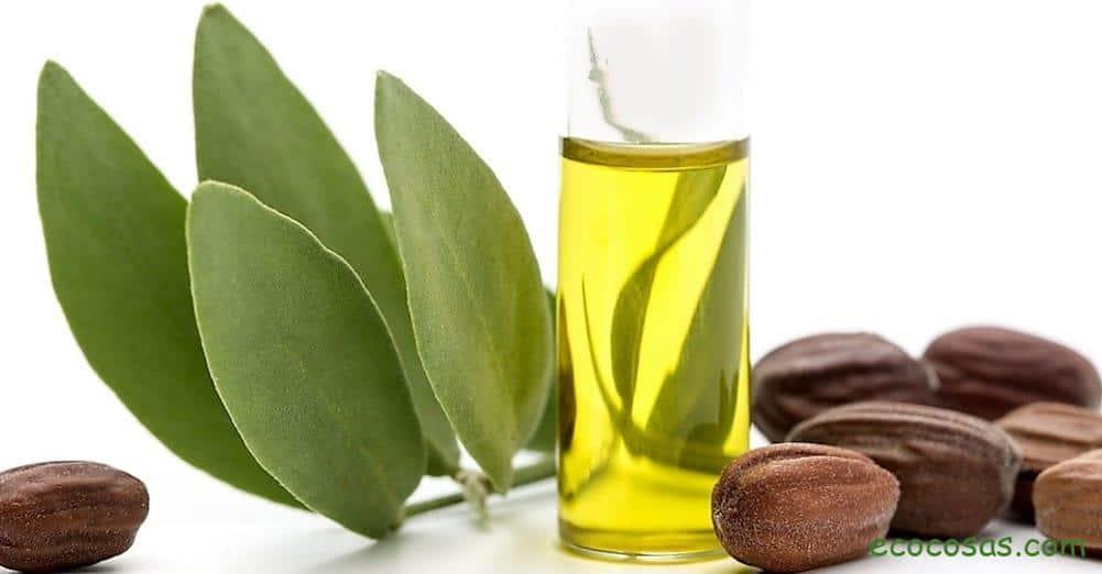 Aceite de Jojoba. Propiedades, beneficios y usos 1