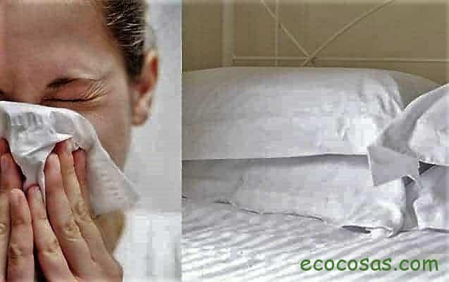 acaros del polvo