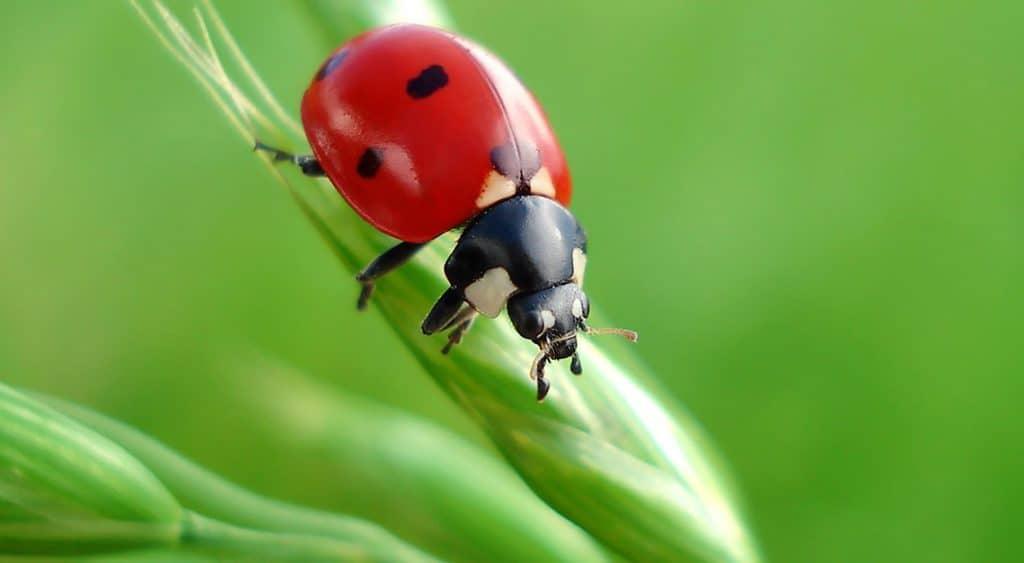 Riesgo de extinción en masa de los insectos 5
