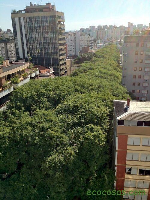 Una calle, cómo deberían ser todas las calles 1