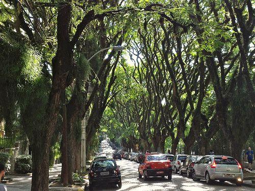 Cuántos más árboles nos rodean, menores son nuestros niveles de estrés 1