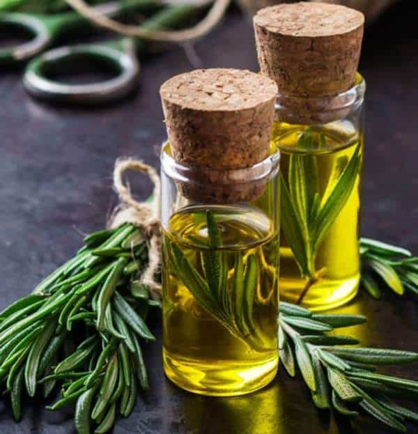 aceite de romero para que sirve y como se prepara