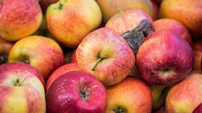 Los manzanos se están muriendo en E.E.U.U. 1