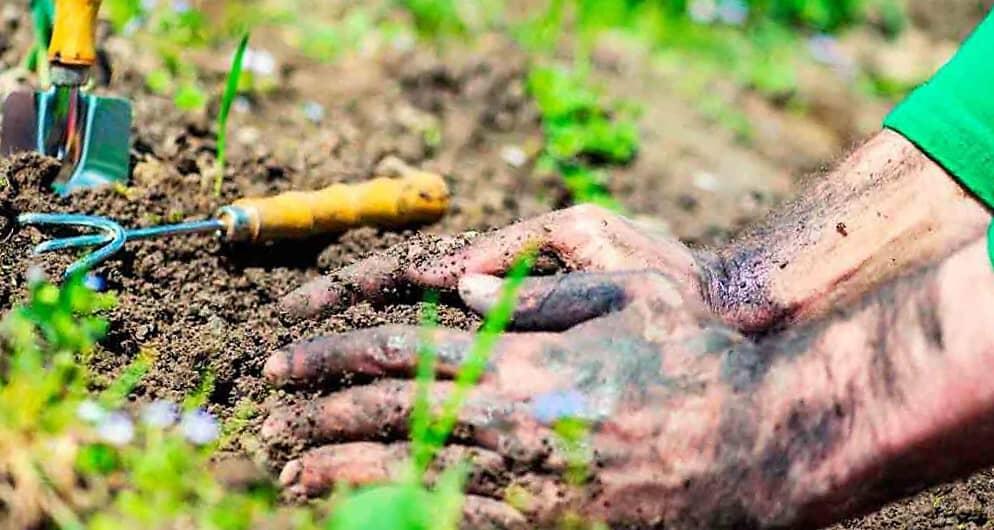 Huertoterapia: Cultivar la cura plantando 1