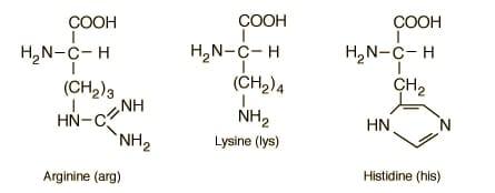 Alimentos con aminoácidos esenciales