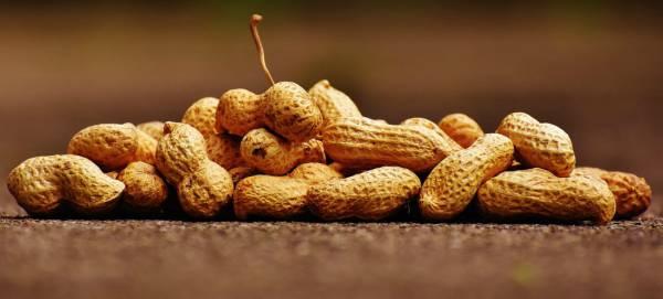 de donde salen los cacahuetes