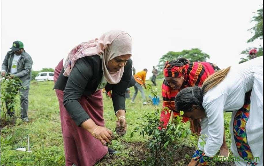 Etiopía: plantan 350 millones de árboles en 12 horas 2