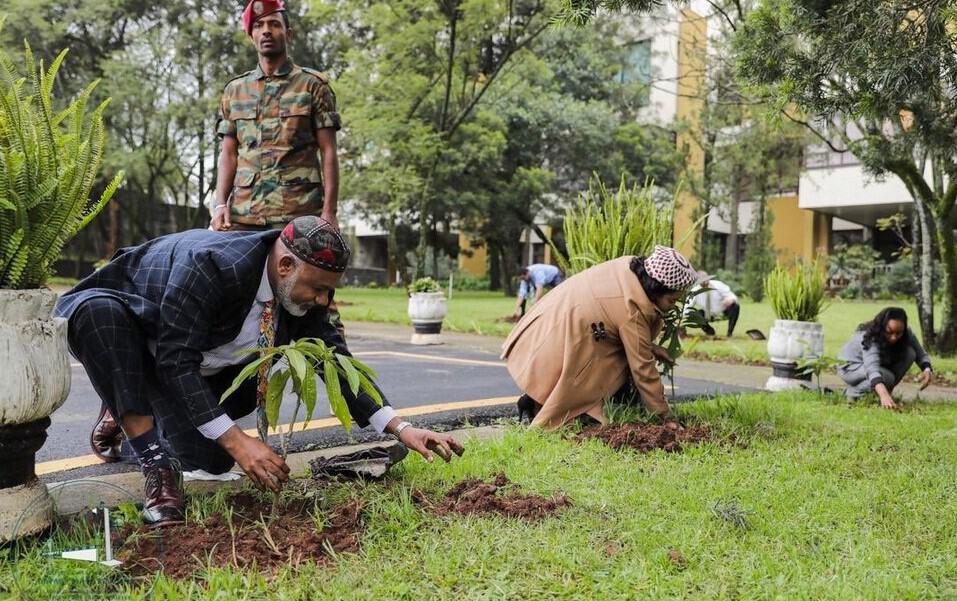 Etiopía: plantan 350 millones de árboles en 12 horas 4