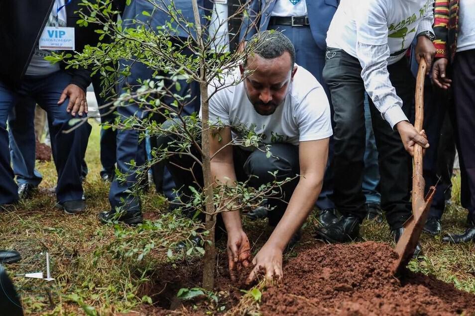 Etiopía: plantan 350 millones de árboles en 12 horas 1