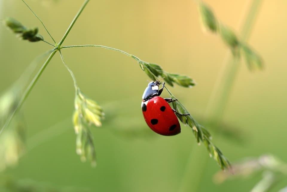 Alemania asigna 100 millones de euros para proteger a los insectos 1