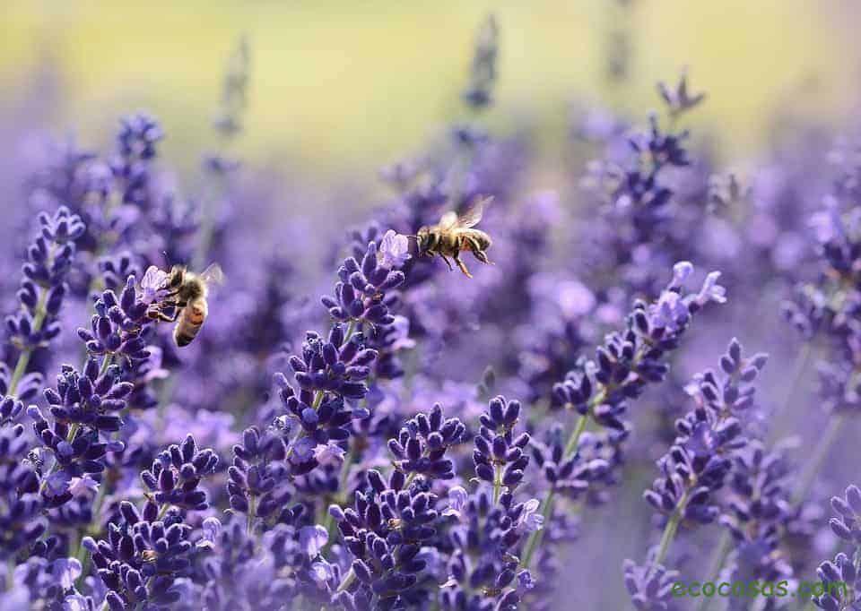 Alemania asigna 100 millones de euros para proteger a los insectos 2