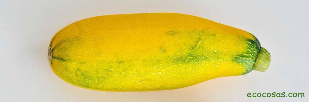 calorias calabacin