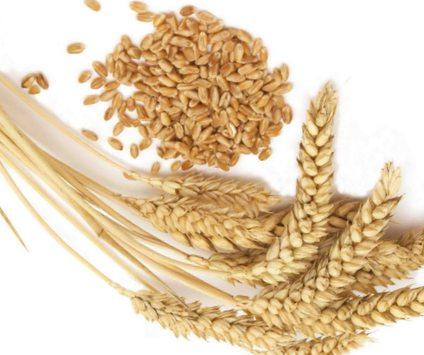 levadura de cerveza y germen de trigo