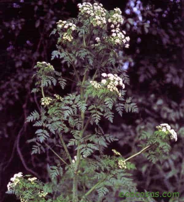 plantas venenosas en casa