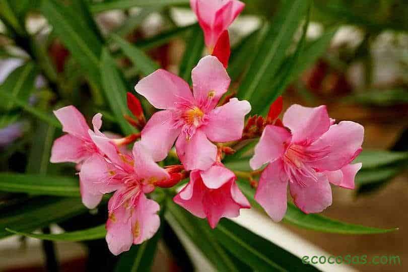 plantas venenosas en mexico