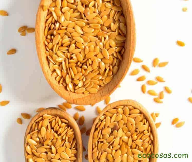 semillas de lino dorado
