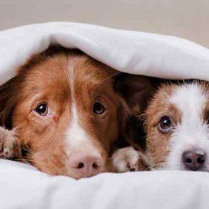 perros y pirotecnia