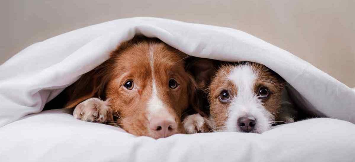 Petardos y pirotecnia dañinos para perros y gente con autismo