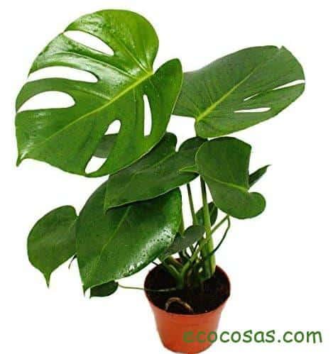 plantas de interior sin luz