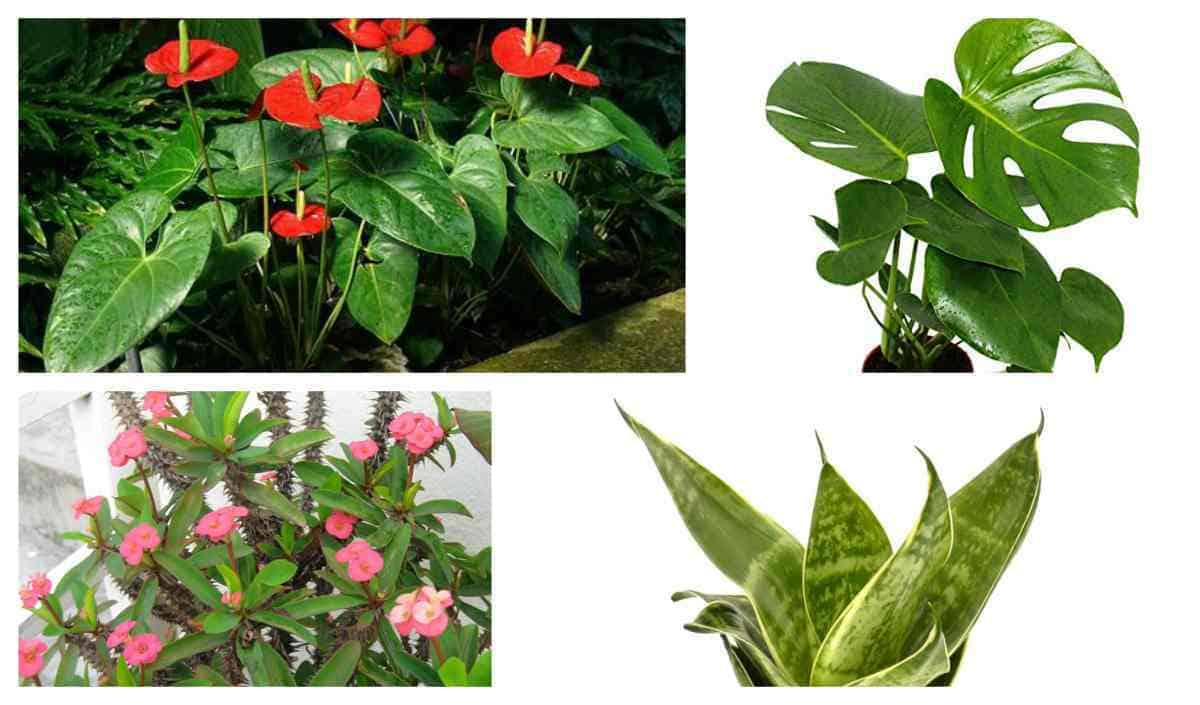plantas de interior