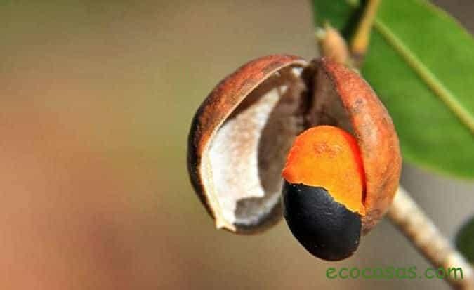 propiedades del aceite de copaiba