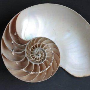 proporcion aurea en la naturaleza