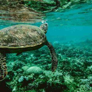 ecosistema acuatico