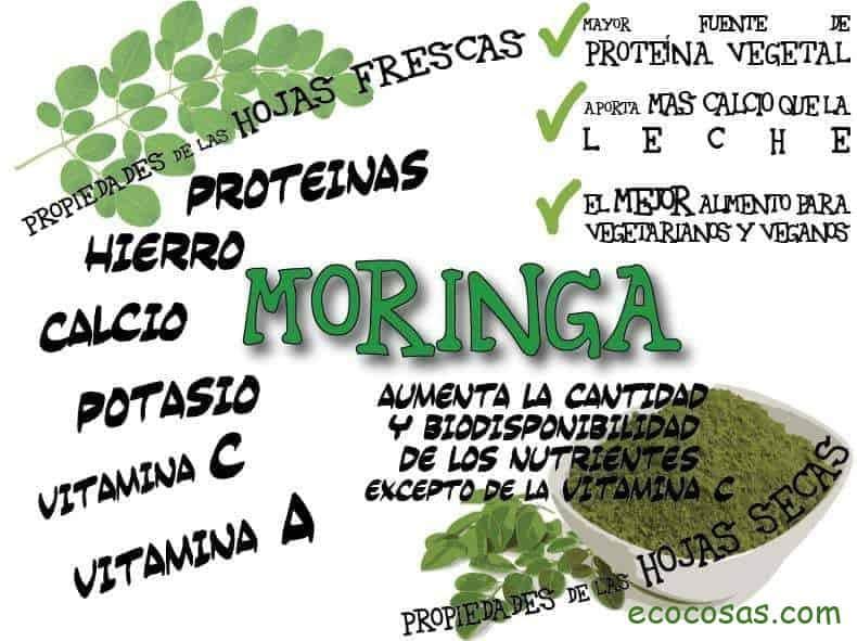 Moringa oleifera: qué es y para qué sirve 2