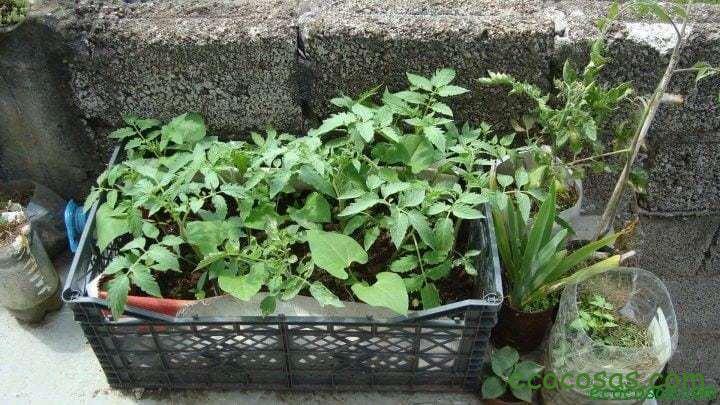 Organoponía, una excelente solución para el huerto en el balcón 3